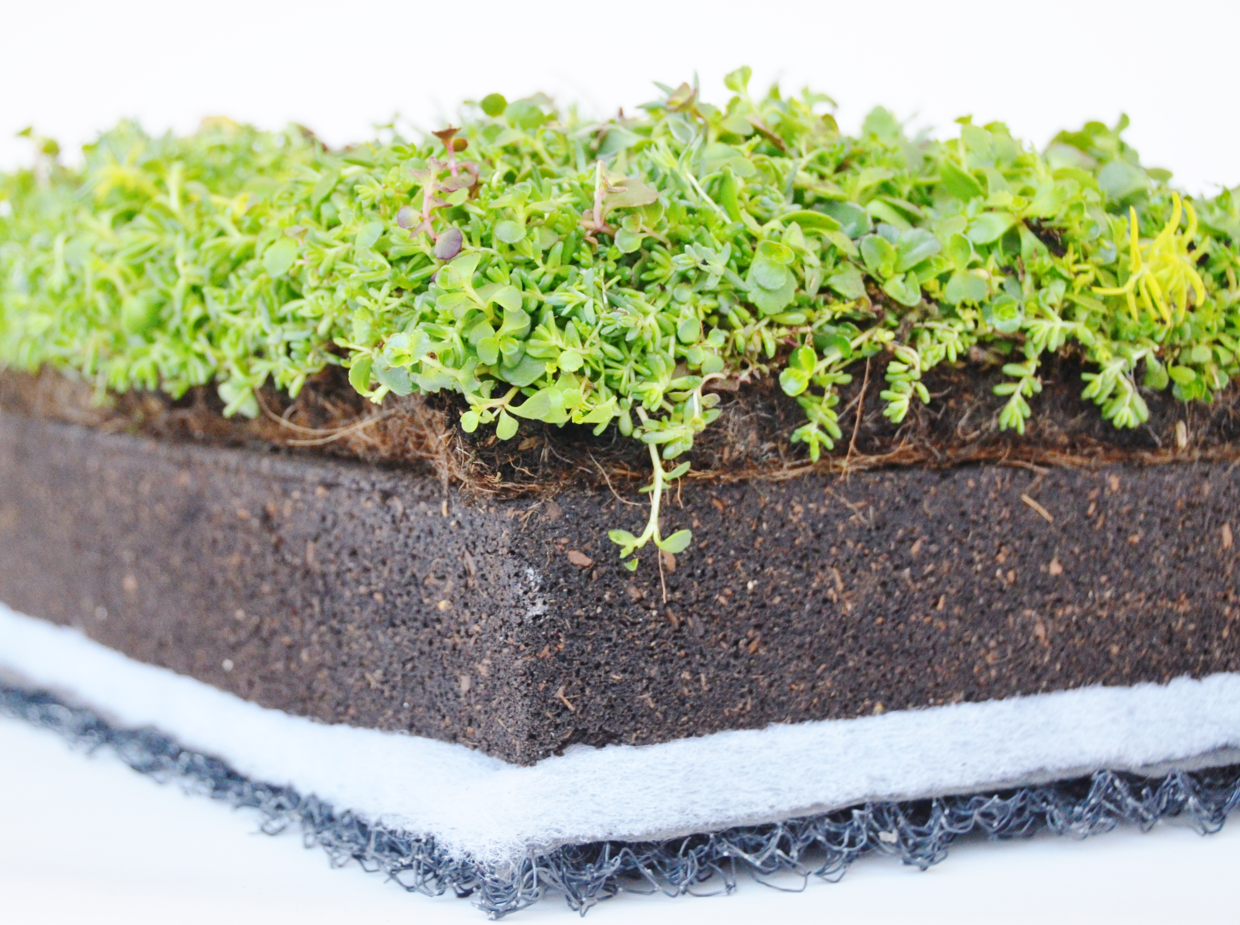 layered & Columbia Green Technologies - green roof systems vegetative roof ... memphite.com